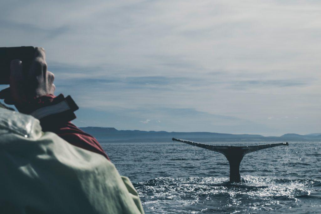Incontrare una balena