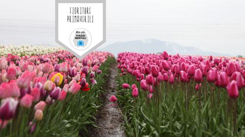 migliori fioriture primaverili 2018
